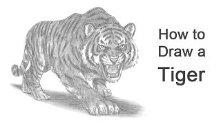 how to draw a tiger by farjana